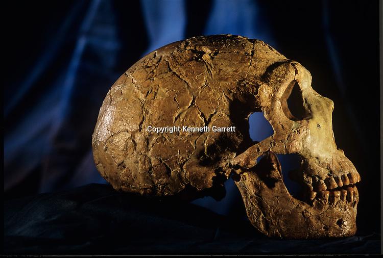 Neandertal; Neanderthal; Amud 1; Jerusalem; Israel; Rockefeller Museum; Human Evolution; skull, Amud Cave, 60,000 BP