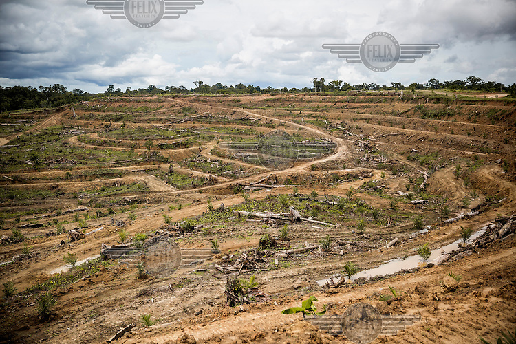 A deforested area near Trin village. The World Bank estimates 70% of logging in PNG is illegal. Malaysian companies dominate the logging business in PNG and they have been accused of serious human rights violations and corrupt practices.