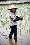 Danang, February 1988. Rice paddies near Danang.