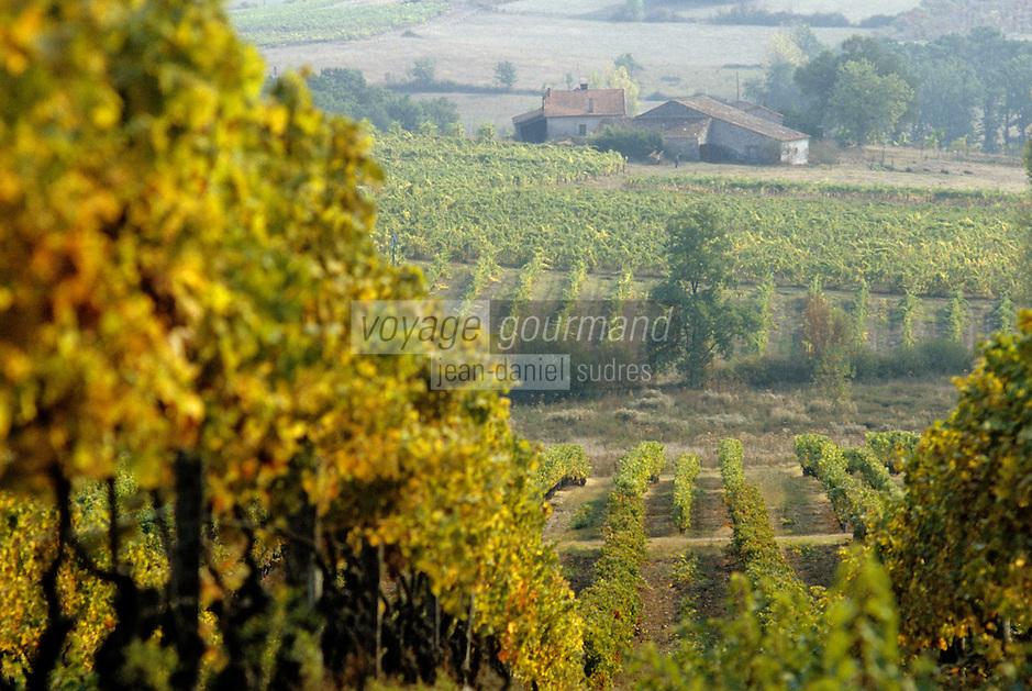 Europe/France/Aquitaine/24/Dordogne/Vallée de la Dordogne/Route des Vins de Bergerac/Env. de Pomport: Le vignoble de Monbazillac