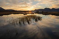 Small marsh pond on Gimsøy, Lofoten Islands, Norway