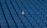 A seagull sits alone in the Brighton & Hove Albion stands, sums up the 5-0 thrashing at the hands of Bournemouth <br /> <br /> Photographer David Horton/CameraSport<br /> <br /> The Premier League - Brighton and Hove Albion v Bournemouth - Saturday 13th April 2019 - The Amex Stadium - Brighton<br /> <br /> World Copyright © 2019 CameraSport. All rights reserved. 43 Linden Ave. Countesthorpe. Leicester. England. LE8 5PG - Tel: +44 (0) 116 277 4147 - admin@camerasport.com - www.camerasport.com