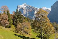 Alpine pastures in front of Wetterhorn- Swiss Alps