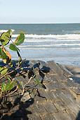 Praia da Tiririca, Itacare, Bahia State, Brazil. Wooden shingle roof.