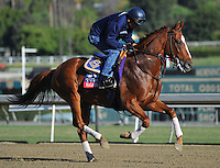 Vagabond Shoes , trained by John Sadler, trains for the Breeders' Cup Turf at Santa Anita Park in Arcadia, California on October 30, 2013.