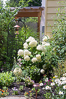 Birdfeeder hanging in zen-like iron lattice next to picket fence and white blooming hydrangea shrub in sunny summer day next to house