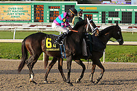 January 17, 2015: Zooming (TX) with Miguel Mena in the Silverbulletday Stakes at the New Orleans Fairgrounds course. Steve Dalmado/ESW/CSM
