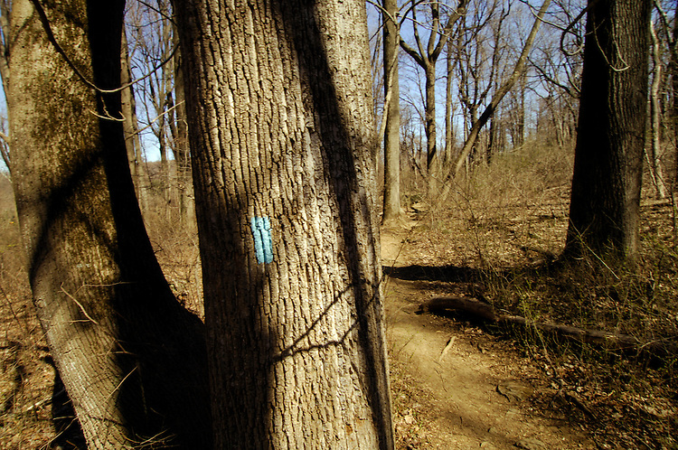 The Big BlueTrail and its blue blaze trail markings makes it's way from Maryland to Virginia. The Big Blue is 144 miles long. It begins in the north at Hancock, Maryland on the C&O Canal Towpath. The southern terminus is the Matthews Arm section of the AT in the Shenandoah National Park.