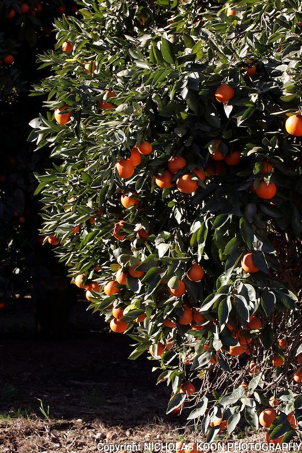 Fairfield Farms, California.