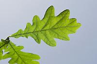 Blätter von Bäumen und Sträuchern