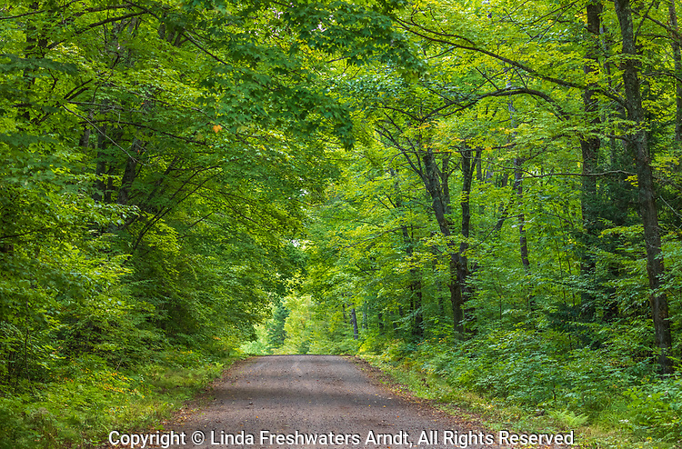 Gravel road in the Chequamegon National Forest in northern Wisconsin.