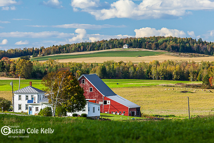 Potato farm in Hodgton, Maine, USA