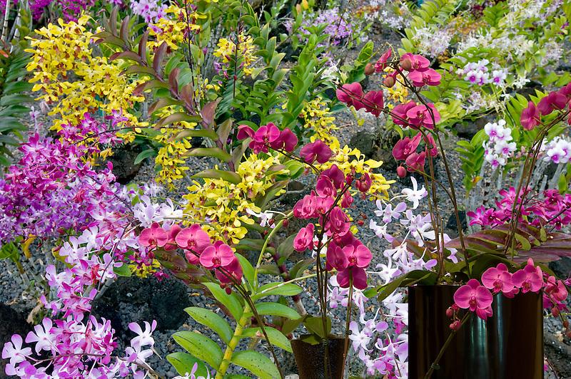 Orchids at Moir Gardens. Klahuna Plantation Resort. Kauai, Hawaii