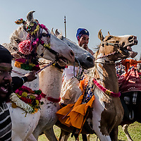 ANANDPUR SAHIB, INDIA - March 06, 2015: Nihangs, or &quot;Sikh warriors&quot; participate in a horse riding competition during Hola Mohalla celebrations on March 06, 2015 in Anandpur Sahib, India. Hola Mahalla or simply Hola is a Sikh event, which takes place on the first of the lunar month of Chet, which usually falls in March, and sometimes coincides with the Sikh New Year. It was started by Guru Gobind Singh the tenth Sikh guru in 1701 AD. Hola Mohalla is a three day Sikh festival, in which Nihang Sikh 'warriors' perform Gatka (mock encounters with real weapons), tent pegging and bareback horse-riding. <br /> Daniel Berehulak for The New York Times