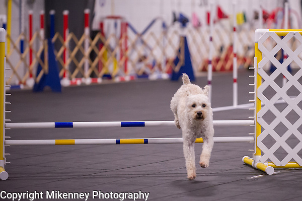 CPE Agility Trial held Apr 3 thru 5 2015 at Boomtowne Canine Campus