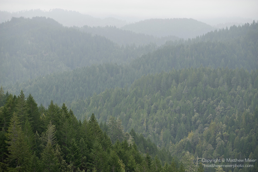 Highway 1, Leggett, California; fog blanketing rolling hills, containing a forest of Coast redwood (Sequoia sempervirens) trees stretching for miles, as viewed from an overlook on the side of the Shoreline Highway (Highway 1) on the drive from the Pacific ocean, inland to Leggett