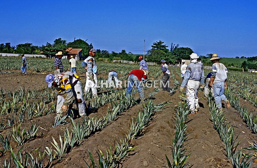 Plantação de abacaxi em São Francisco do Itabapoana. Rio de Janeiro. 2002. Foto de Juca Martins.