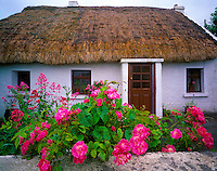 Traditional Irish cottage and roses County Meath Republic of Ireland  May  Afternoon
