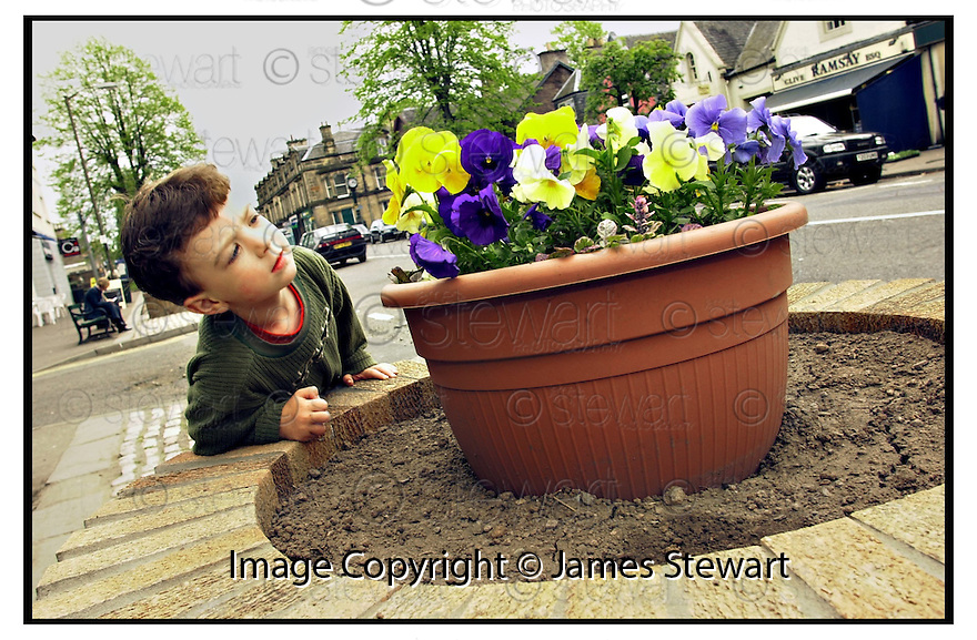 15th May 2001   Copyright Pic : James Stewart .Ref :                           .File Name : stewart01-flower pots.FOUR YEAR OLD ANGUS MACERLAINE INSPECTS THE NEW FLOWER POT WHICH HAVE CAUSED THE CONTROVERSY IN BRIDGE OF ALLAN.....James Stewart Photo Agency, Stewart House, Stewart Road, Falkirk. FK2 7AS      Vat Reg No. 607 6932 25.Office : +44 (0) 1324 630007     Mobile : 07721 416997.Fax     :  +44 (0) 1324 630007.E-mail : jim@jspa.co.uk.If you require further information then contact Jim Stewart on any of the numbers above.........