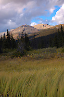 Lovely afternoon light in Banff, Bow Lake, with grass blowing in the wind