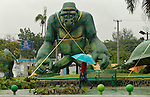 A resident walks next to a gorilla sculpture which was secured with straps by the pass Tropical Storm Emily which moves through Dominican Republic and Haiti;  the Tropical Storm Emily dissipated Thursday afternoon , but could regenerate in the next few days, according to the National Hurricane Center.  August 4, 2011 VIEWpress/  Kena Betancur