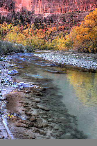 Autumn has arrived at along the Virgin River at Zion National Park, Utah