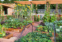 Raised bed vegetable garden with fruit strawberries, sunflowers, climbing scarlet runner beans vines, house, trellis, protection netting, corn, chard, sunny day