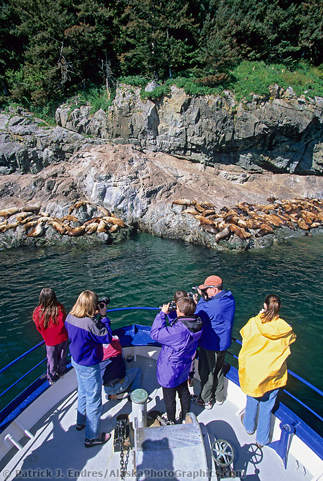 Tourists view and photograph sea lion haulout from bow of boat in Prince William Sound, Alaska.