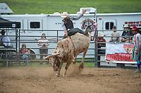 SEBRA - Red Lion, PA - 7.25.2015 - Bulls & Action