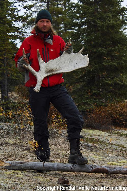 Mann holder fallgevir fra elg ---- Man holding moose antler