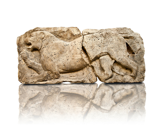 """Lion from the """"Satyr Hunting Wils Animals, freezes, 460 B.C. From Xanthos, UNESCO World Heritage site, south west Turkey. A British Museum exhibit GR 1848-10-20-2-9 (sculpture B 2902- 298)."""