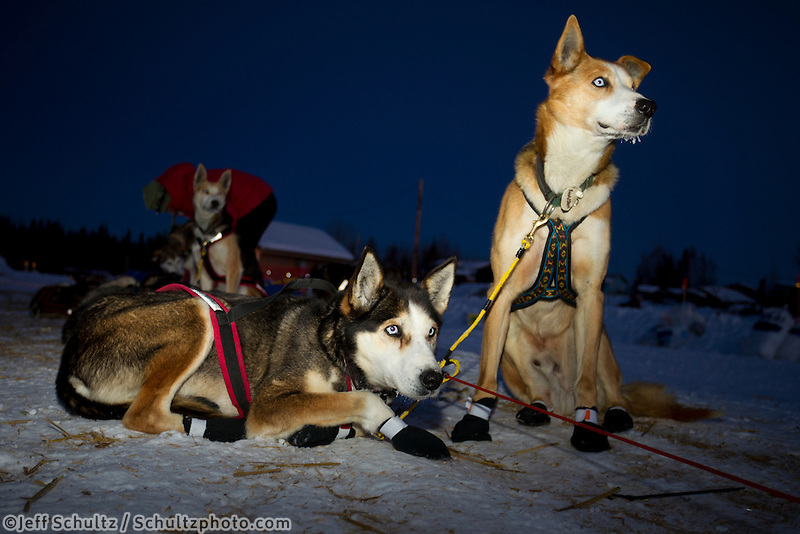 Wattie McDonald's dogs Katmai and Kingston rest after arriving at the Nikolai checkpoint in the early hours on Wednesday during Iditarod 2011