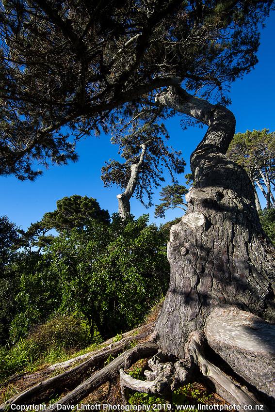 Papamoa Domain. Bay Of Plenty Regional Council in Tauranga, New Zealand on Tuesday, 23 July 2019. Photo: Dave Lintott / lintottphoto.co.nz