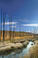 Obsidian Creek flowing through a misty meadow and dead trees in autumn, Yellowstone National Park, Wyoming, USA