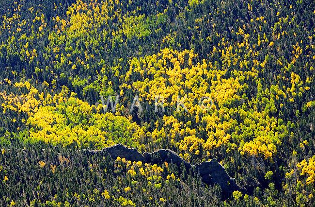 aspen trees and volcanic dyke