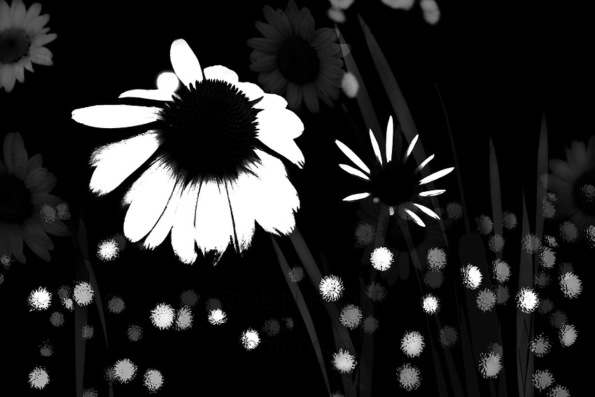 Black and white floral abstract photograph.