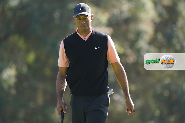 Tiger Woods (USA) in action on the 12th green during the 1st round of The Genesis Invitational, Riviera Country Club, Pacific Palisades, Los Angeles, USA. 12/02/2020<br /> Picture: Golffile | Phil Inglis<br /> <br /> <br /> All photo usage must carry mandatory copyright credit (© Golffile | Phil Inglis)