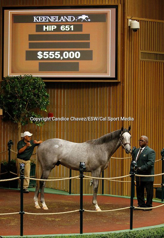 September 16, 2015: Hip 651 Unbridled's Song - Stage Stop colt consigned by Legacy Bloodstock.  Candice Chavez/ESW/CSM
