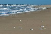 Texelse strand in de winter
