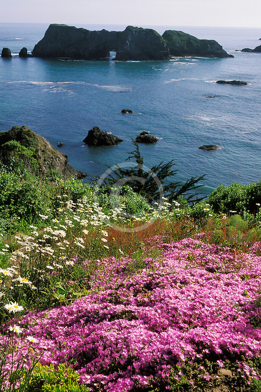 California, Mendocino County, Elk, Harbor House garden