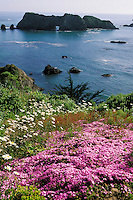 California, Mendocino County, Elk, Harbor House garden