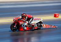 Jul 30, 2017; Sonoma, CA, USA; NHRA pro stock motorcycle rider Hector Arana Jr during the Sonoma Nationals at Sonoma Raceway. Mandatory Credit: Mark J. Rebilas-USA TODAY Sports