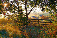 Misty Farm Sunrise with Poster Edges artistic effect