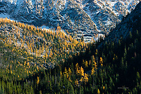 Larch and Subalpine Forest, North Cascades National Park, Washington