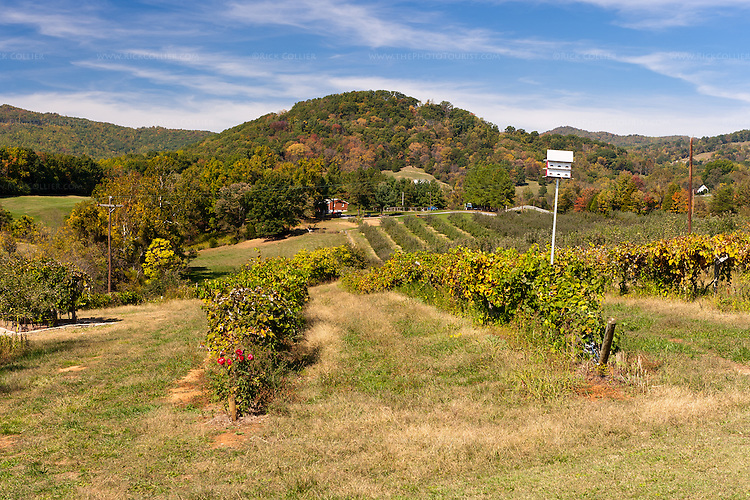 A variety of fruit vines and orchards are visible in the view from the front of Johnson Orchards and Peaks of Otter Winery.
