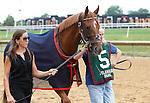 July 21, 2012  Patchattack, trained by Graham Motion, heads to the paddock before competing in the Delaware Handicap at Delaware Park, Stanton, DE. She finished sixth in the race, which was won by Royal Delta. ©Joan Fairman Kanes/Eclipse Sportswire