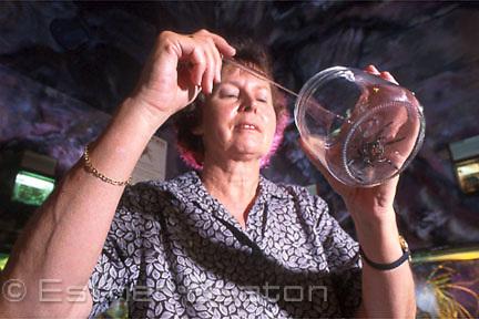 Lyn Abra milking Funnelweb spider in jar at Australian Reptile Park. Sydney, NSW.