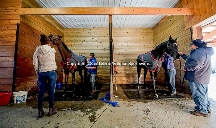 March 18, 2020 : Horses for trainer Graham Motion get a bath after training. Life goes on at Fair Hill Training Center in Fair Hill, Maryland. While no spectators are allowed at any race facility in the United States, or the world essentially, during the coronavirus pandemic, the horses still need to train and exercise. The Fair Hill Trainer Center in Cecil County in Maryland is still open for business and the equine athletes remain active through the COVID-19 crisis. Scott Serio/Eclipse Sportswire/CSM