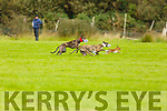 Action from the Kilflynn Coursing on Sunday.