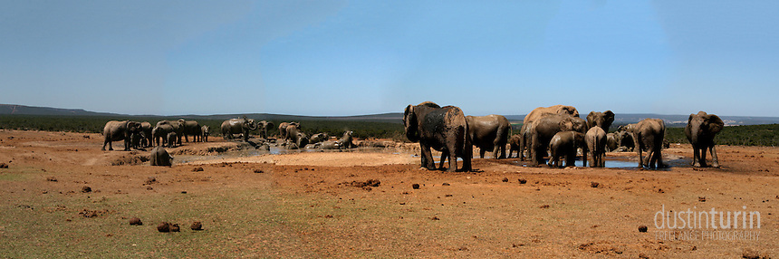 Panoramic image composed of 5 original images, taken at watering hole in Addo Elephant National Park, South Africa.